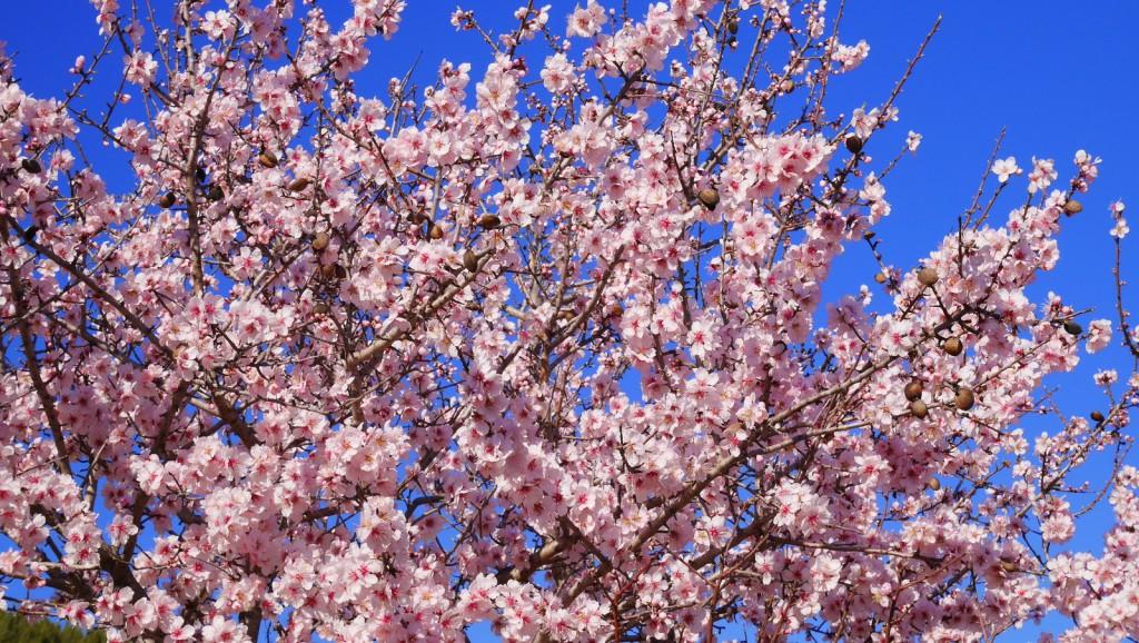 ob_8a369e_blossom-1