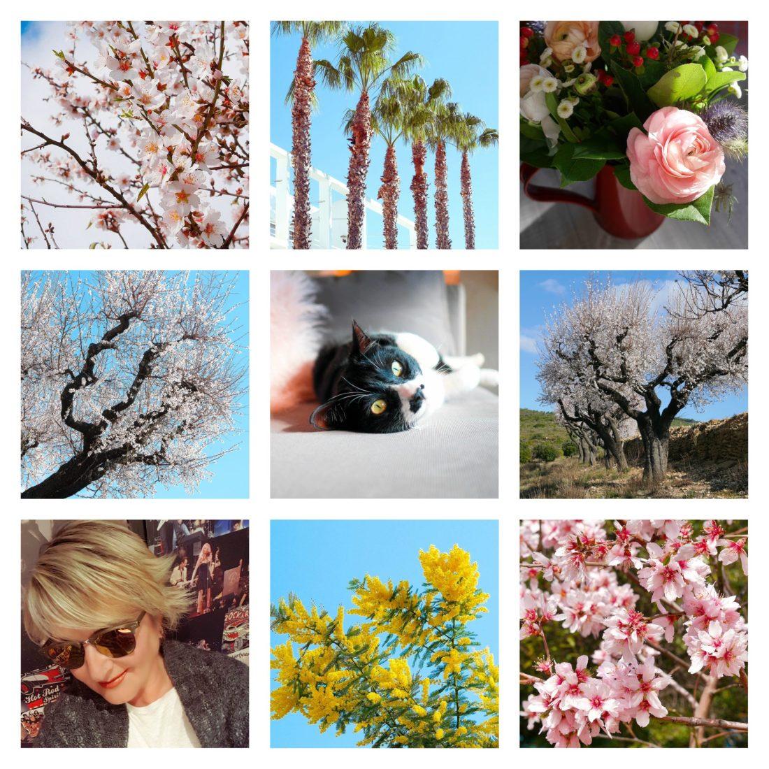 les-jolies-choses-fevrier-2018