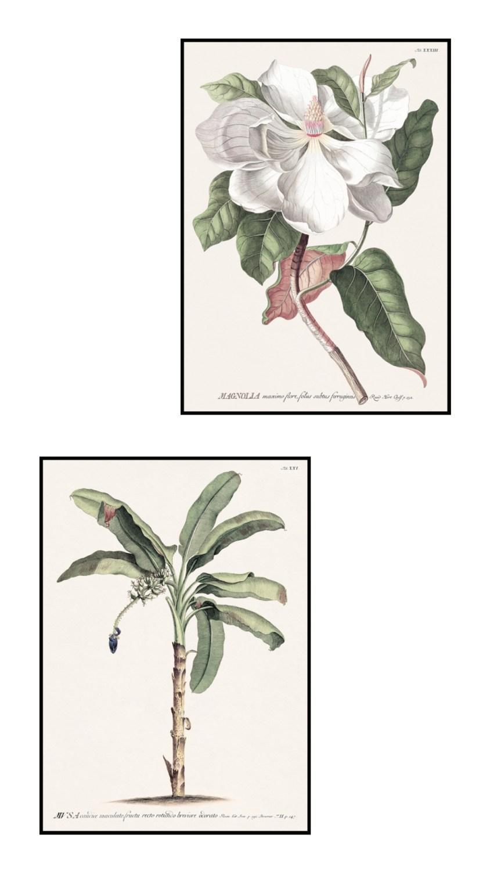 posterstore-planche-botanique