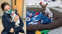 A-Chihuahua-finds-new-home-after-the-owner-passed-away-from-COVID-19