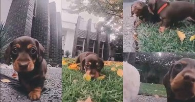 Adorable-puppies-chasing-the-camera-will-melt-your-heart