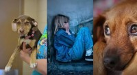 Heroic-rescue-dog-saves-the-life-of-3-year-old,-poor-toddler-found-shivering-in-a-ditch