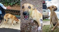 Paralyzed-puppy-drags-herself-across-Botswana-looking-for-help