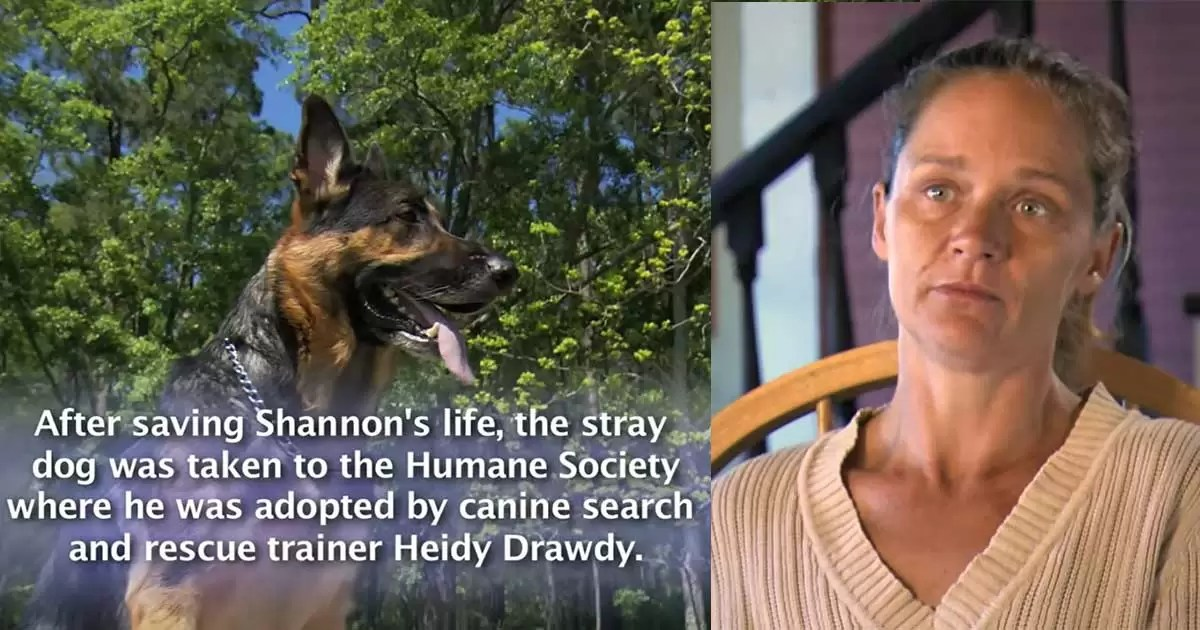 Stray-dog-'Hero'-pulls-injured-woman-from-a-car-wreck-and-saves-her-life