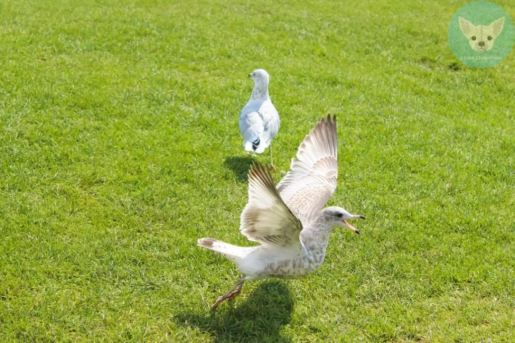 seagull on green land