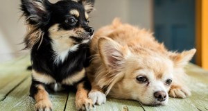 QUEEN'S CORGI TRAINER SAYS DOGS WILL SUFFER FROM 'SEVERE SEPARATION ANXIETY' AFTER CORONAVIRUS LOCKDOWN ENDS