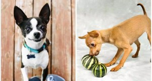 5 Exotic Fruits Your Pet Can Eat Safely
