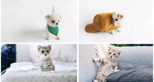 Chihuahuas and Cats