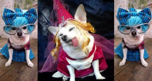 FASHION-INSTA! STYLISH CHIHUAHUA BECOMES INSTAGRAM CELEBRITY