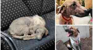 Sick Dog Walks Right Through Doors Of Shelter And Happily Falls Asleep