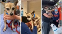 A missing dog turns up in South Florida 6 years after it was stolen
