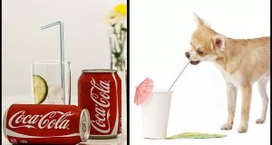 Read This Before Sharing Soda With Your Dog!