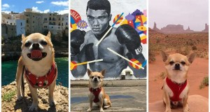 Follow the adventures of a tiny Italian chihuahua who loves unusual places