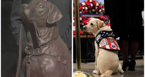 Long Island statue honors George H.W. Bush's service dog, Sully