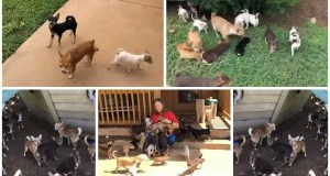 Nearly 200 Chihuahuas up for adoption at Georgia animal sanctuary