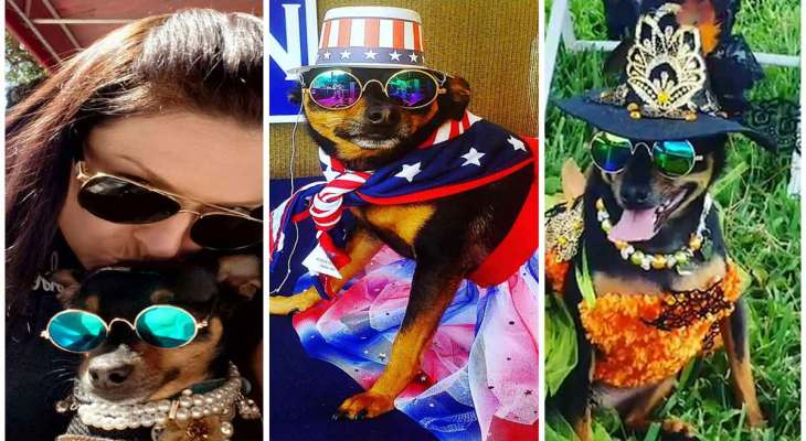 This rescue dog with a $10K wardrobe never wears the same outfit twice