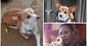 Toledo woman's support dog stolen