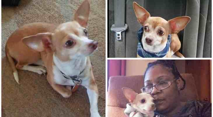 Toledo woman's support dog stolen