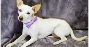 Are you ready for a sweet boy to love? Lucas would enjoy spending the day with you