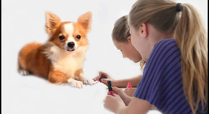 How to Safely Paint Your Dog's Nails