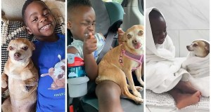 Little Boy Gets Adopted and His Life Changes After Meeting His New Best Friend, the Family Dog
