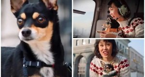 The Pack: Linh's Dog Chance's Breed, Tricks, Age, Personality & Weight