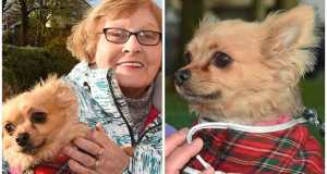 Volunteers come to rescue of pet chihuahua after owner Janet is taken ill