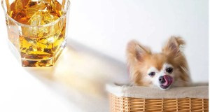 What To Do If Your Dog Drinks Alcohol