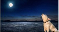 Why Do Dogs Howl At The Moon?