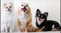 5 Things to Consider Before Adopting a Pet