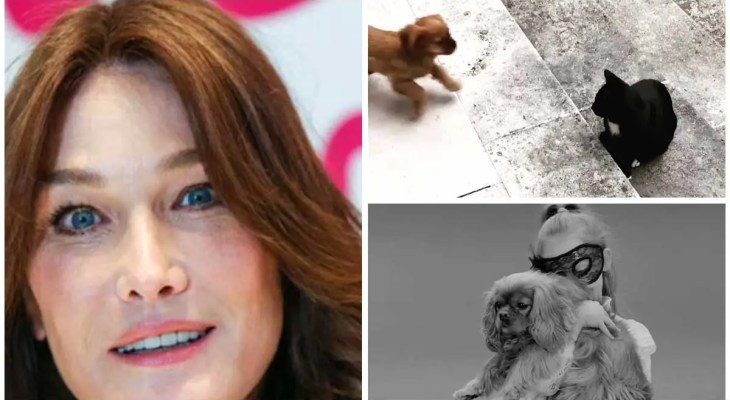 """Carla Bruni happy to welcome """"a new member in the family"""""""