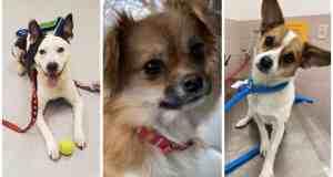 Cuyahoga Falls Pets Who Need A Home: Meet Clark Aka Jonesy, Pepper, Petey & More