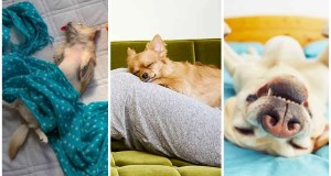 Different Sleeping Disorders in Dogs That You Need to Know About