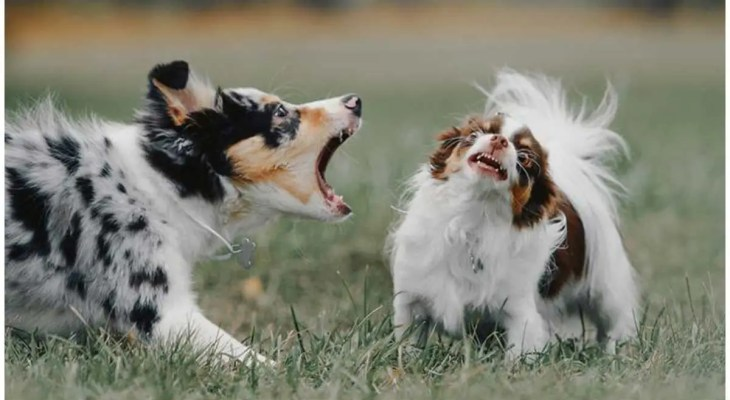 Everything About Dogs Barking