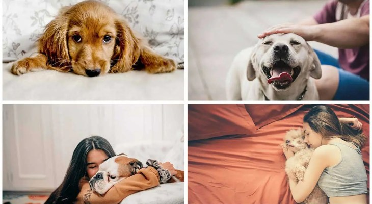 Here are the dog breeds in dating app pictures that get most matches