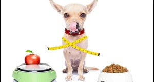 How Do I Know If My Dog Needs Supplements? Experts Tell All