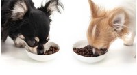 How much Food Should a Chihuahua Eat