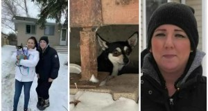 Social media helps track down lost dog