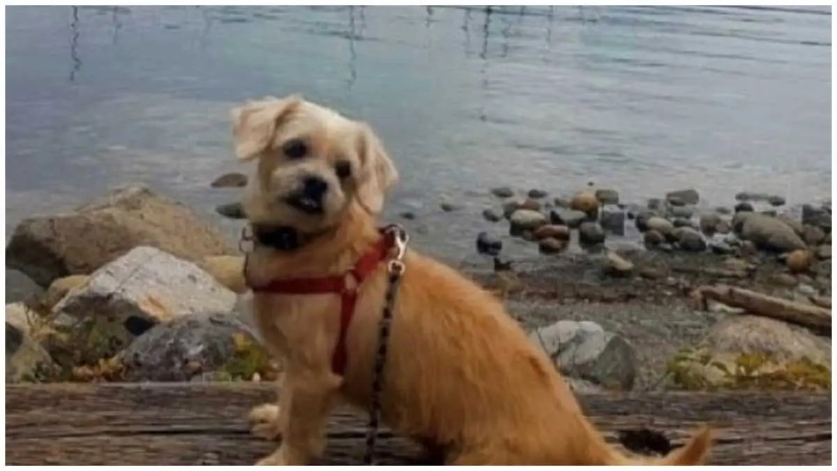 Tribunal finds Coquitlam woman who received nearly $2,300 on GoFundMe lied about dog attack