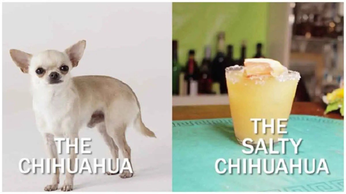 The 'Salty Chihuahua Cocktail' Recipe Will Make You Happy And Yappy!