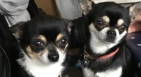 Dog owner charged over Chihuahua death attack on Edinburgh beach