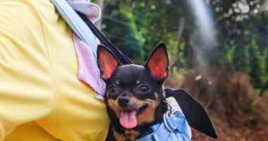 Chihuahua travel
