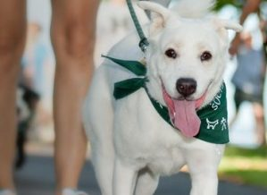 Hawaiian Humane Society Petwalk