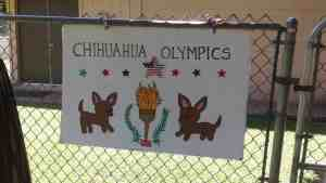 Chihuahua Olympics @ Nalowinds Boarding Kennel