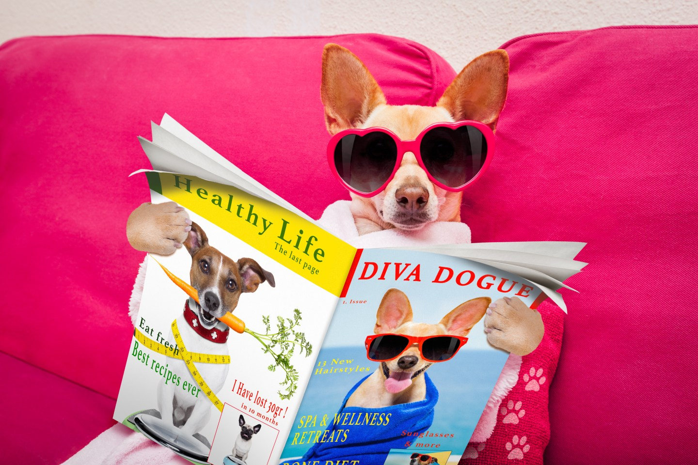 Is Your Chihuahua Glamorous Enough?