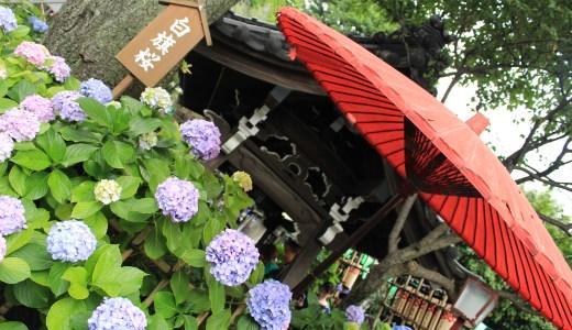 文京あじさいまつり中に白山神社で紫陽花をみてきた【東京の神社】