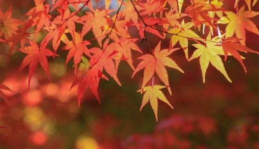 秋の京都観光情報まとめ