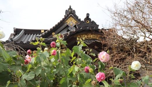 鎌倉江ノ島七福神の1つ!若宮大路の近くにある妙隆寺へ行ってきた【神奈川の寺院】