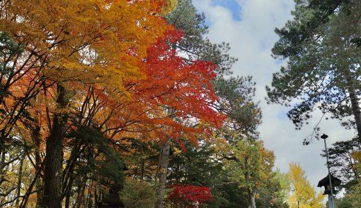 【旭川】紅葉シーズンの上川神社へ行ってきた【北海道の神社】
