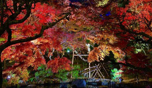 【鎌倉】心が洗われる紫陽花と紅葉の名所!長谷寺へ行ってきた【神奈川の寺院】